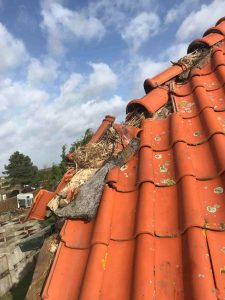 Vogel overlast op het dak verhelpen